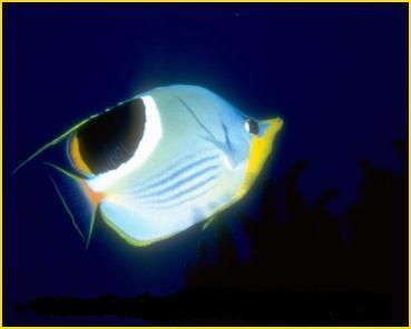 Explorando los secretos del océano